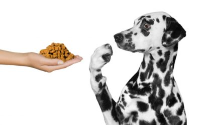 Why Is Food Not Working to Help Calm my Reactive Dog?