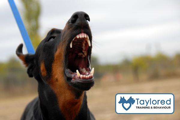 aggressive dog logo