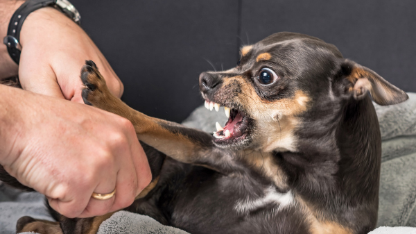 people reactive dog