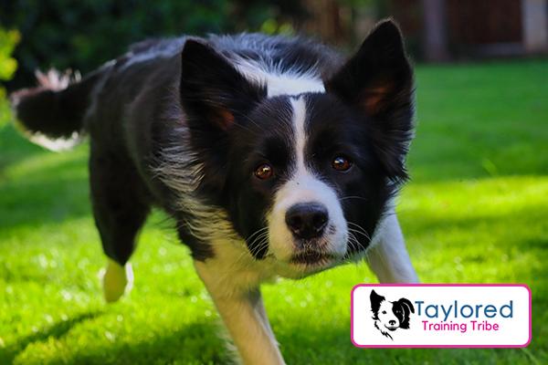 hyperactive dog training