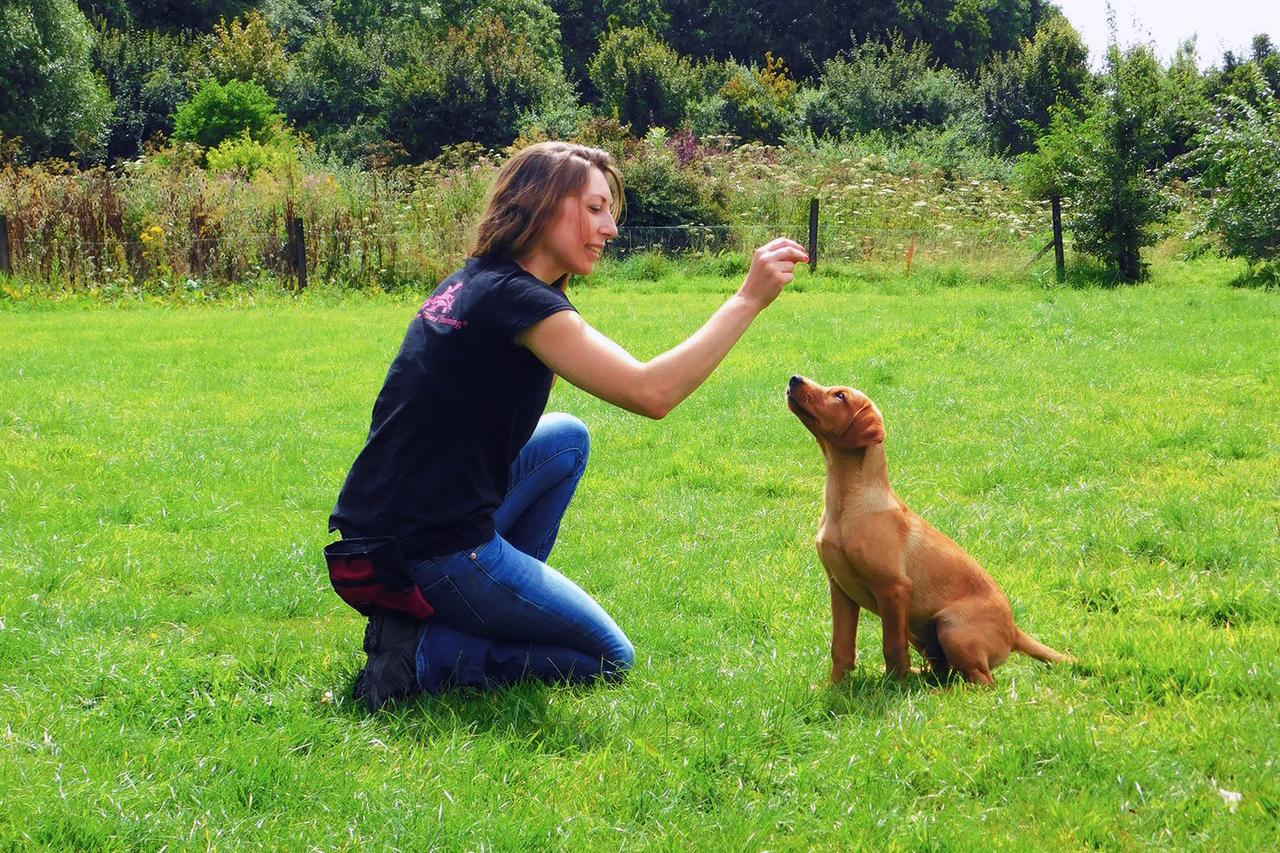 jess richardson dog trainer